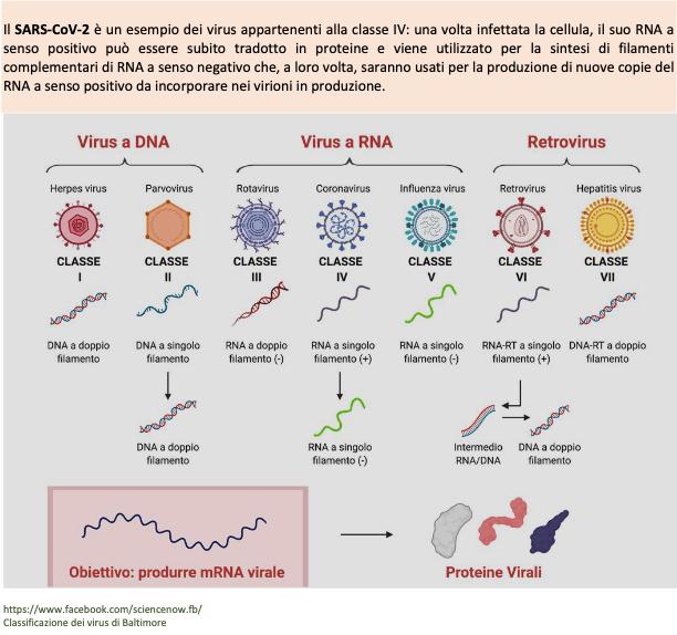 Moltissimo di ciò che ci dicono su virus e vaccini è sbagliato. Il resto è nascosto (seconda parte)