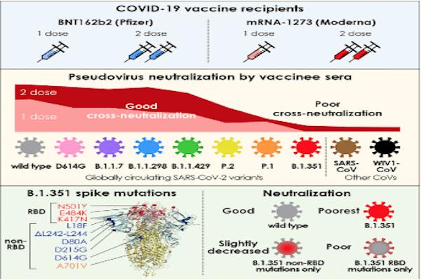 È possibile, secondo scienza, stabilire se e quali varianti del virus siano state provocate dalla vaccinazione? Sì lo è